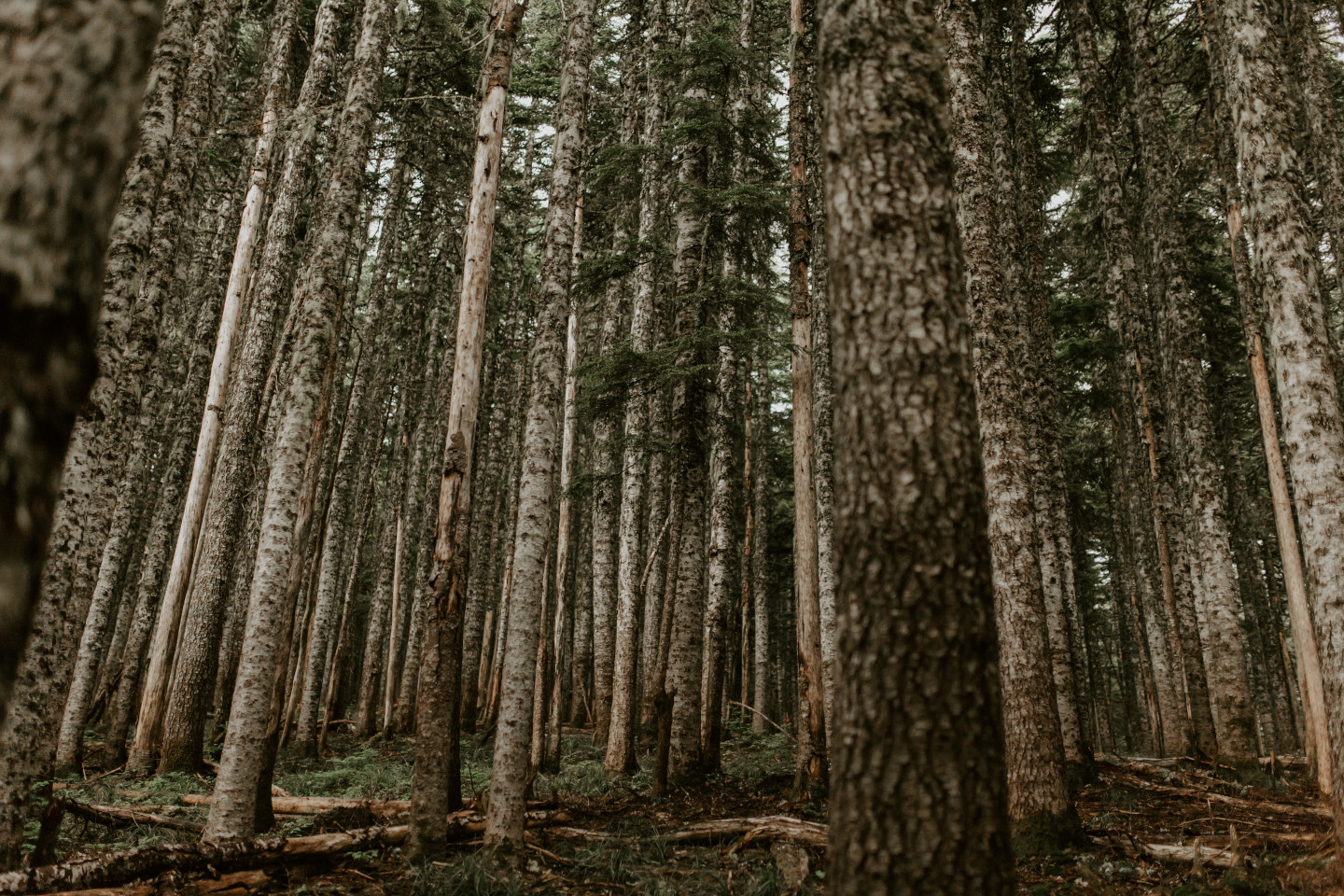 The trees that line the trail towards Mount Hood. Adventure elopement wedding shoot by Sienna Plus Josh.