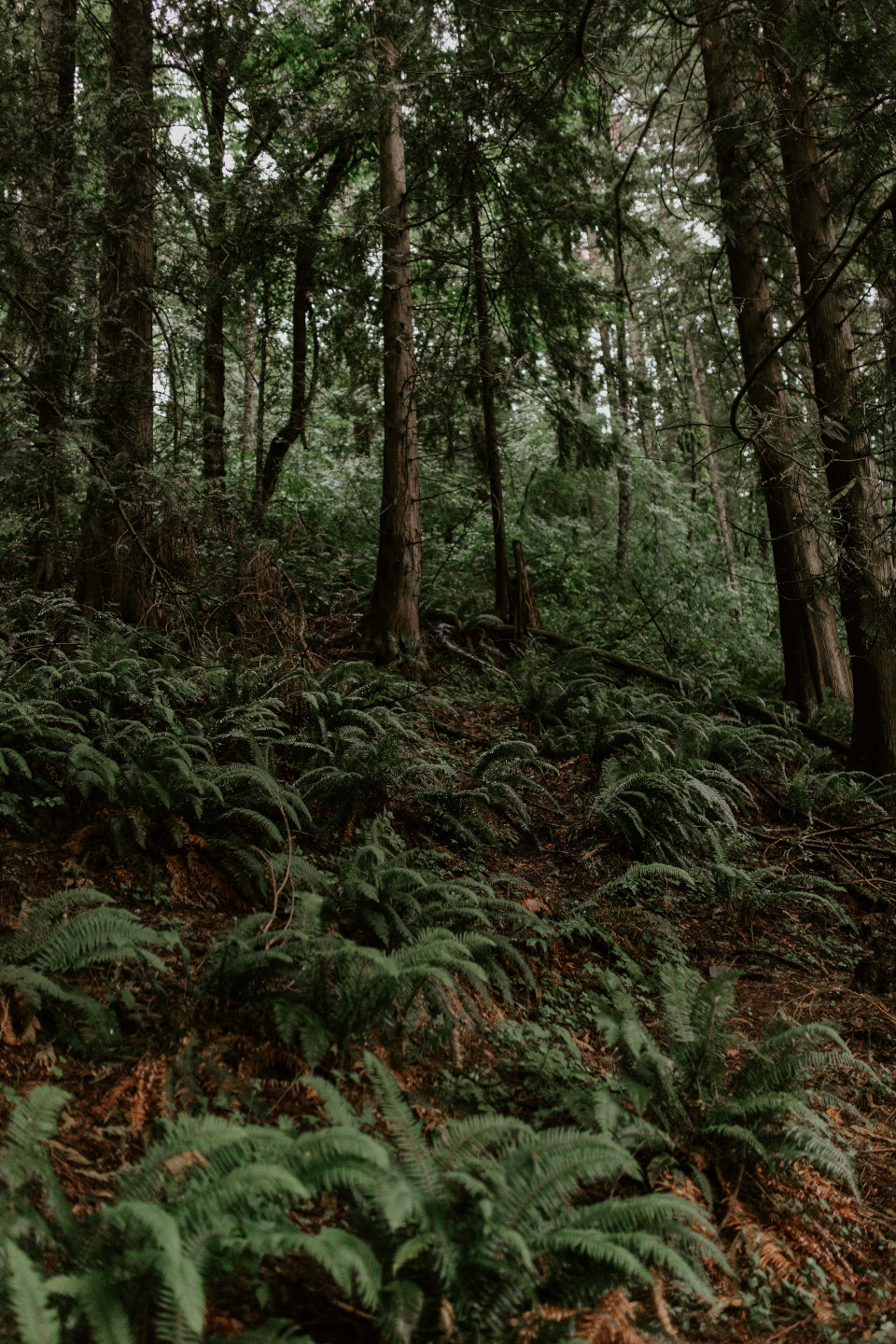 The surrounding woods at Skamina House, Washington. Elopement photography in Portland Oregon by Sienna Plus Josh.